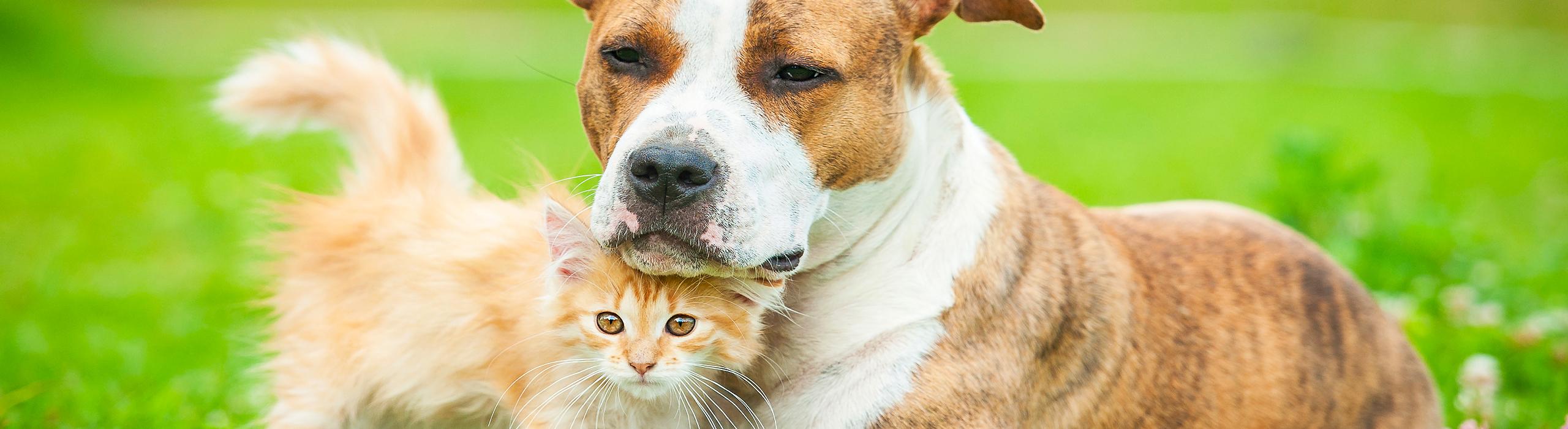 Tierisches Wissen