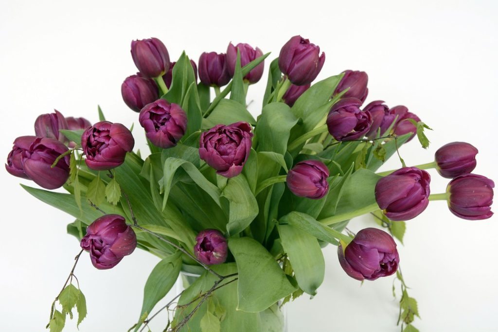tulips-1408862_1280