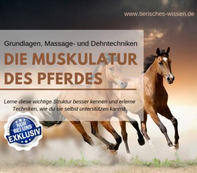 Pferd_Muskeln