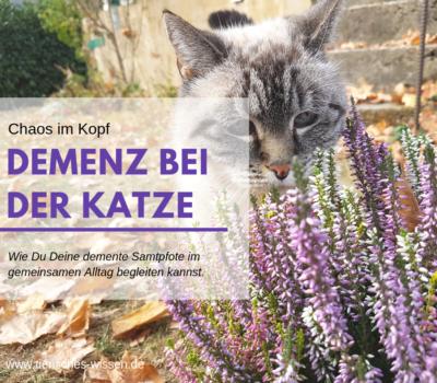 Katze Demenz Beitrag